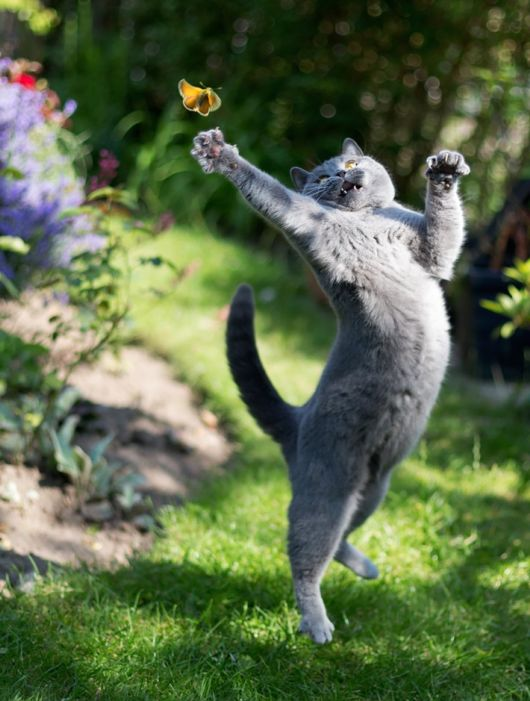 Jumping Cats Look Like Ninjas