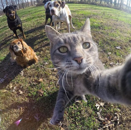 Superb Selfie Taking Cat
