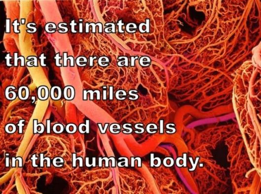 Astounding Facts About Human Body