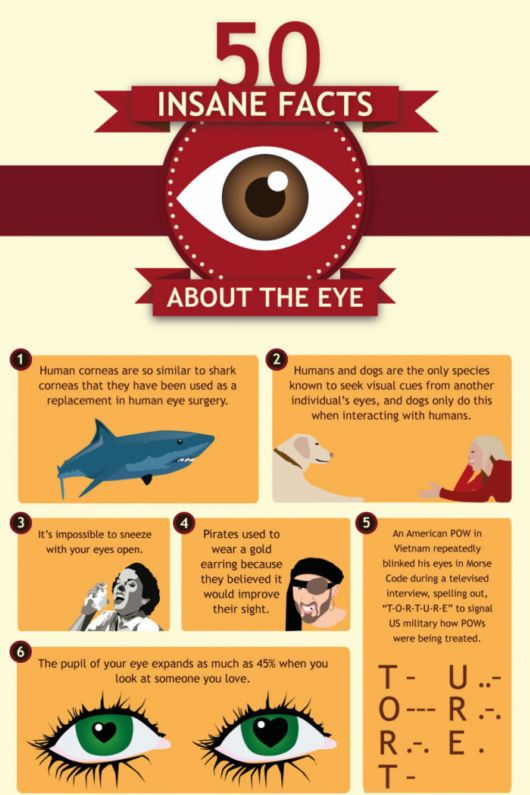 50 Incredible Facts About The Human Eye