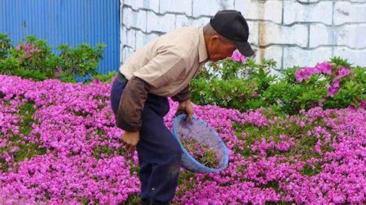 Loving Husband Plant A Field Of Fragrant Flowers For His Blind Wife To Make Her Smile Every Day