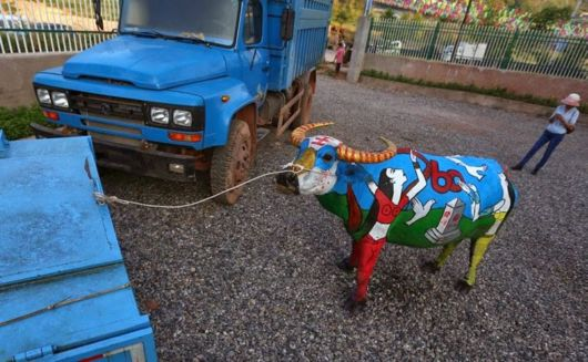 Buffalo Body-Painting Competition In China