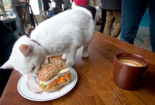 Amazing Cat Cafe In New York