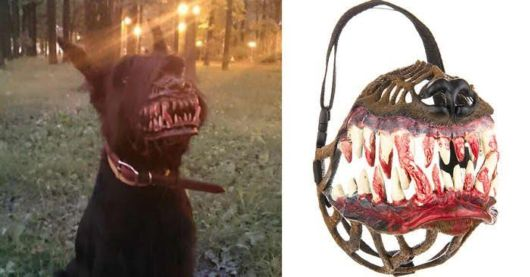 Muzze For Walking Your Dog In The Woods