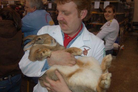 Worlds Largest Rabbit Breed