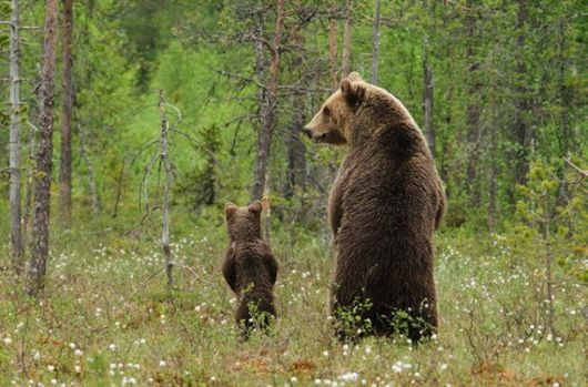 Parenting In The Wilderness